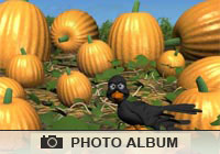 Photo Albums Pumpkin Patch Ecard