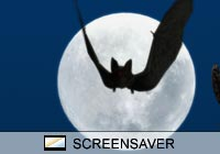 3D Screensavers Bat Moon Screen Saver